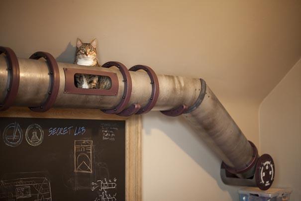 Atracción para gatos